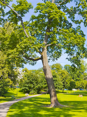 Helsingin Puistot Ja Rannat